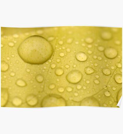 Lemon Drops Poster