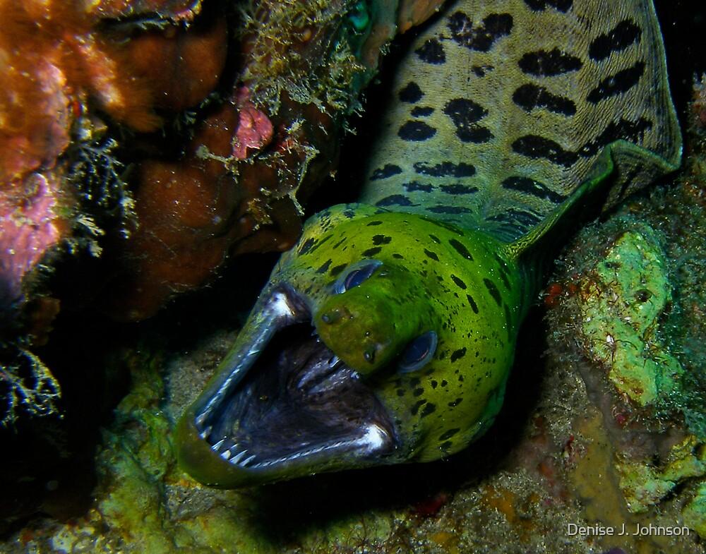 Fimbriated Moray Eel by Denise J. Johnson