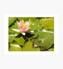 lily pad garter snake Art Print