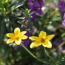 Simple Yellow flower by Elspeth  McClanahan