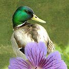 My Kinda Duck by Zoe Marlowe