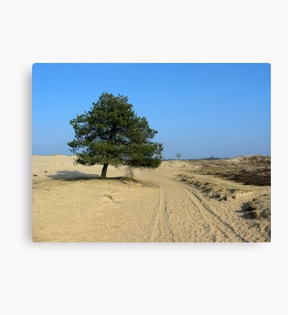 Only Sand and a Tree Canvas Print