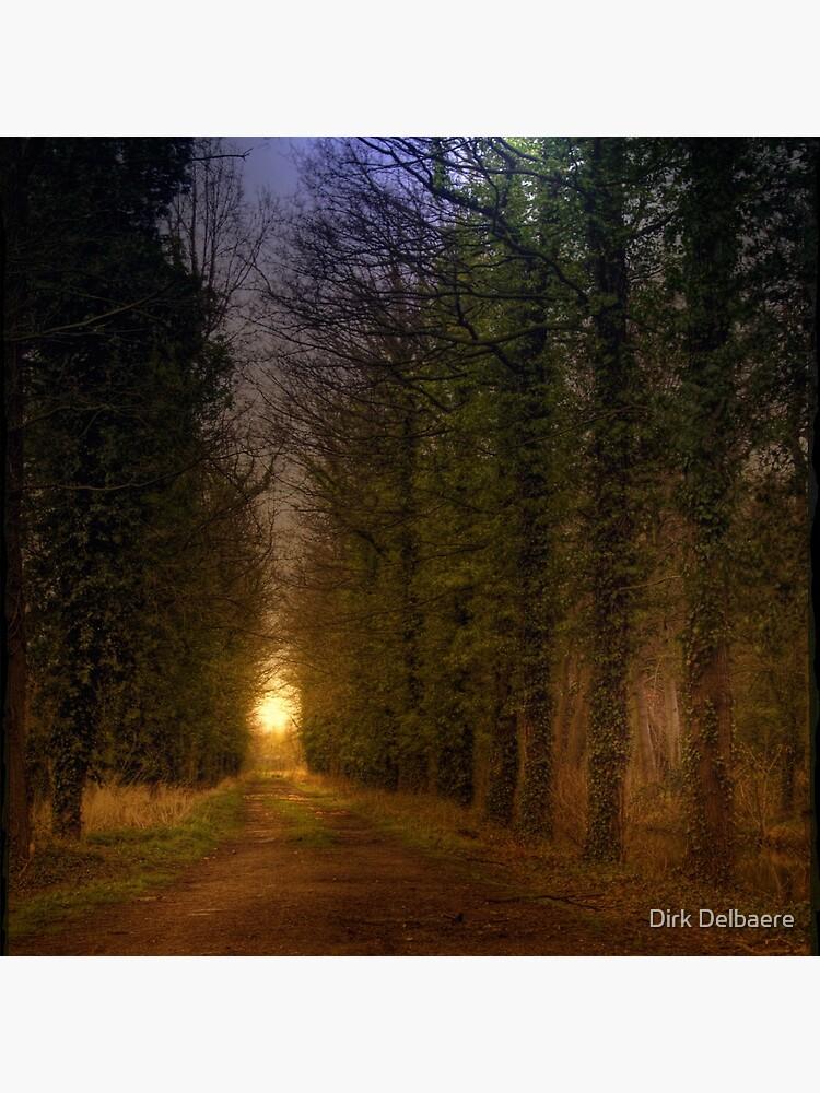 Path; Light by Delbaere