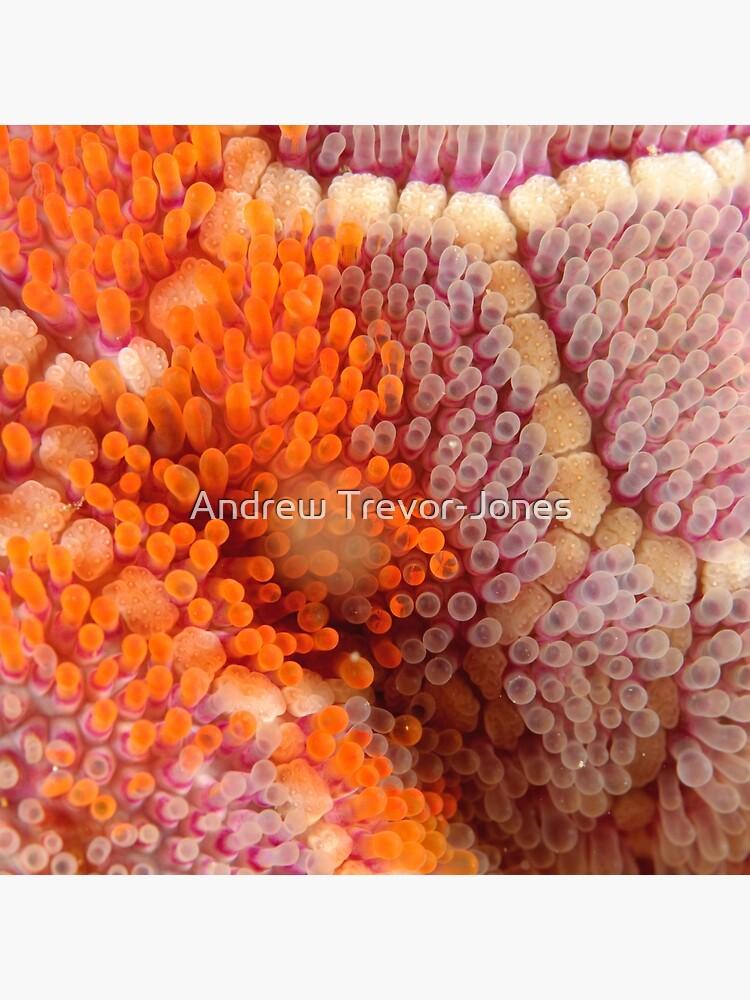 Mosaic Sea Star Macro by andrewtj