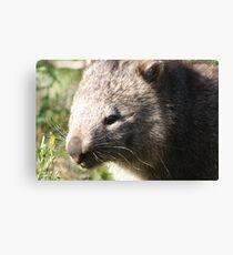Wandering wombat Canvas Print