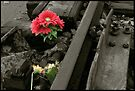 Remembering Anne Frank by Peter Harpley