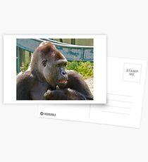 Portrait of a Gorilla Postcards