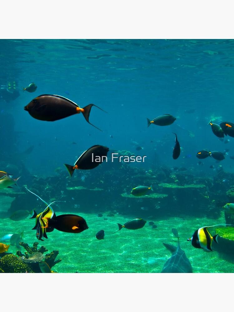 Fish Tank by Mowog
