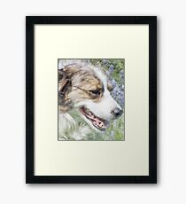 Dog in Bluebells Framed Print
