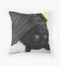 Australian Infant Black Fruit Bat Throw Pillow