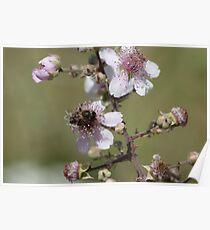 Wild flora VIII 5265 Poster