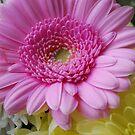 Pink Flower by Geraldine Miller