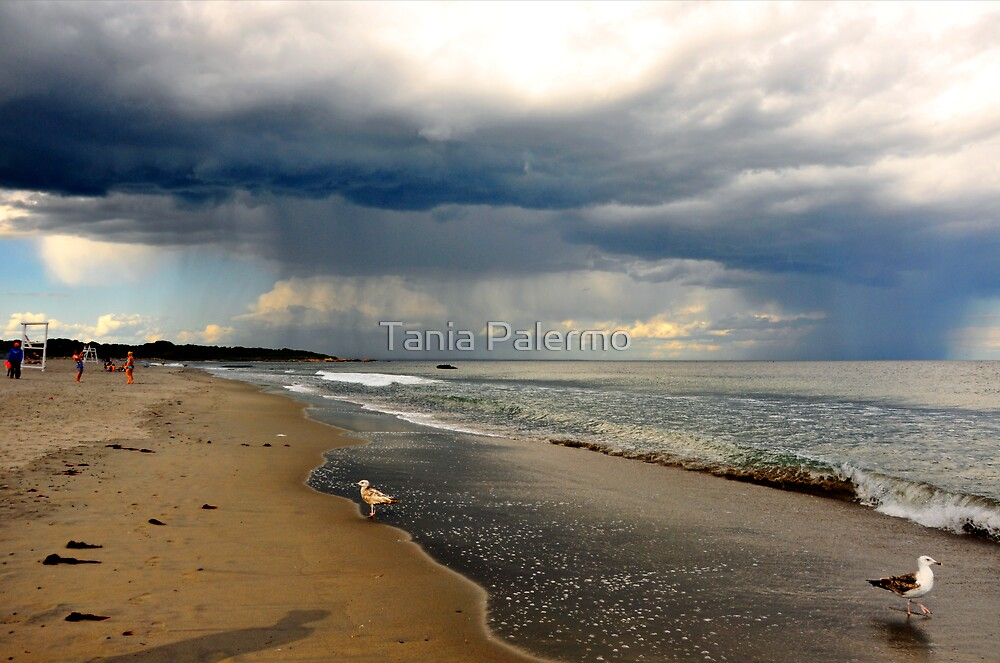 seagull (exit stage left) by Tania Palermo