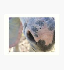 The Donkeys Nose Art Print