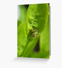 """I'm a Stink Bug, What are You?"" Greeting Card"