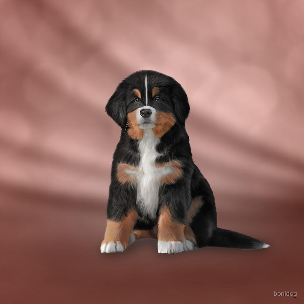 Drawing Puppy Bernese Mountain Dog By Bonidog Redbubble
