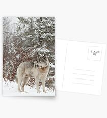 Timber Wolf Postcards