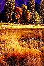 """""""Illuminated Meadow"""" by Lynn Bawden"""