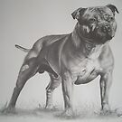 Staffordshire Bull Terrier in Pencil by Peter Lawton