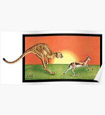 Cheetahroo on the Hunt Poster