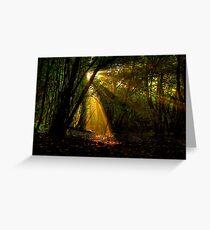 Raggi di luce nel bosco - Missano - (zocca modena italy ) _4244_ Greeting Card