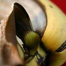 Rotting fruit banana by Sophie Matthews