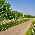 A green-white polder dike by Adri  Padmos
