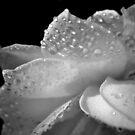 Memories of rain by Karen01