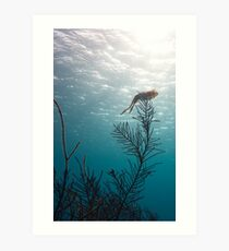 Reef Squid Art Print