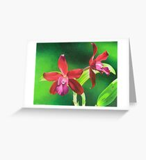 Red cattleya orchid Greeting Card