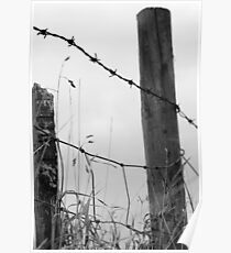 Barbed Wire Fench Poster