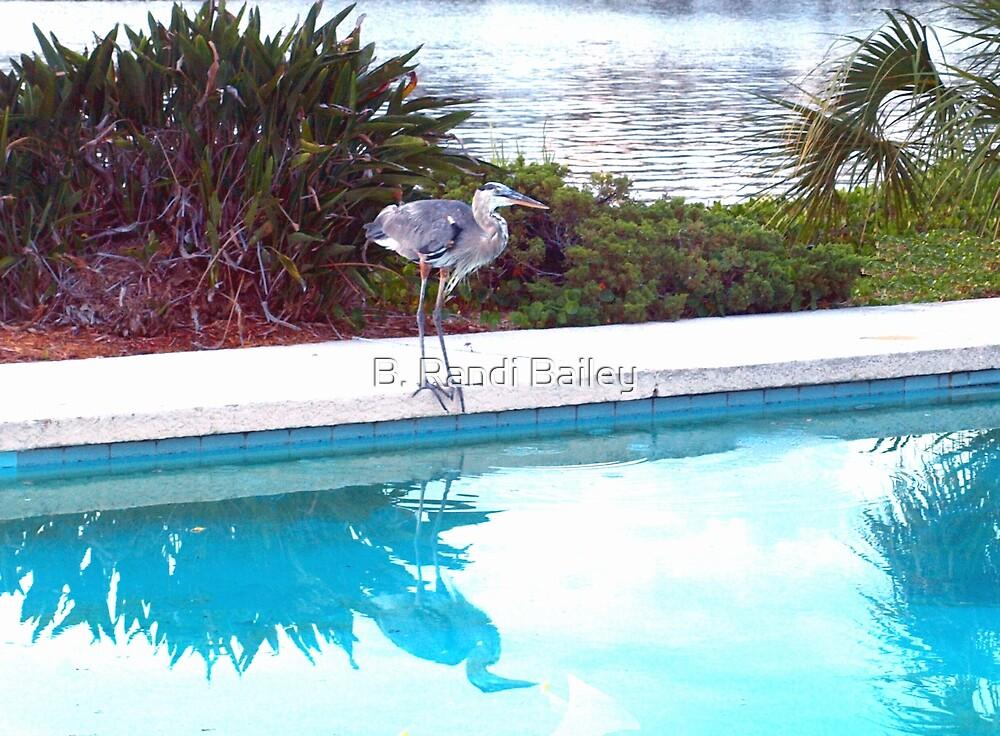 Heron enjoying the pool by ♥⊱ B. Randi Bailey
