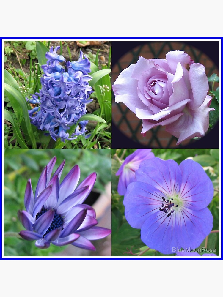 Blue Beauties Collage -  A Floral Study in Blue von BlueMoonRose