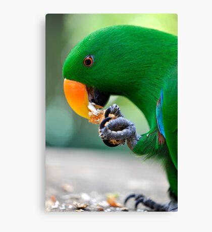 Have a bite - Eclectus parrot Canvas Print
