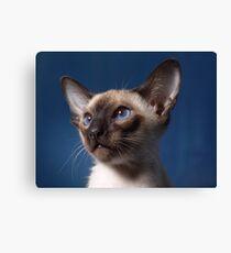 Lienzo gato siames