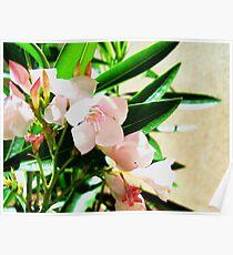 The Light Pink Flower Poster