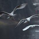 Gull on landing by Oleksii Rybakov