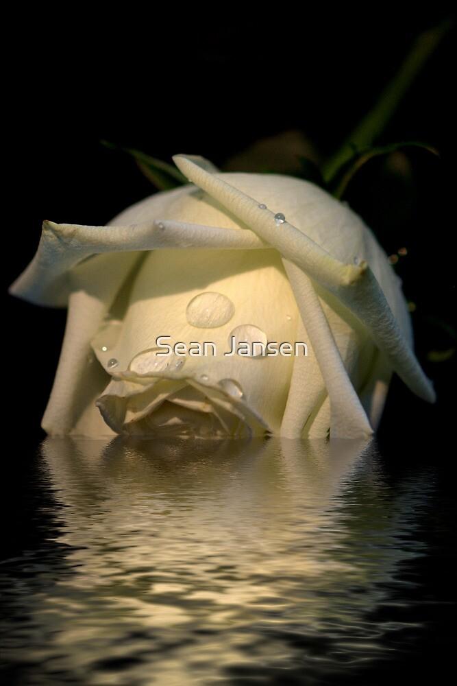 Pure White by Sean Jansen