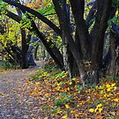 Autumn along the Arrow by Peter Hammer