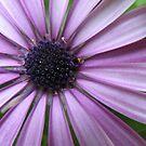 Purple Eye by shiro