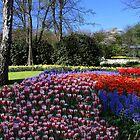 «Primavera en el jardín Keukenhof» de annalisa bianchetti