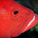 Red fish face  by Stephen Colquitt