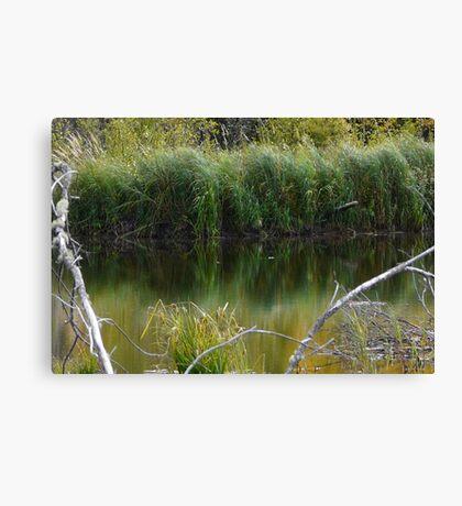 Wild Pond Grass Canvas Print