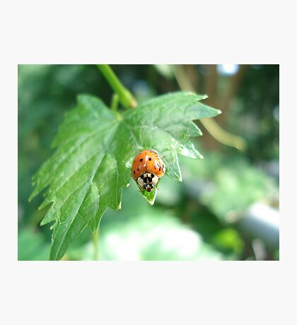 Ladybug, ladybug, do your thing... Photographic Print