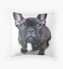 Cojín French Bulldog Puppy