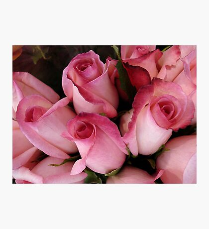 PRETTY PINK ROSEBUDS Photographic Print