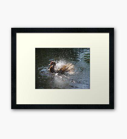 SPLISH, SPLASH, I WAS TAKIN' A BATH... Framed Print