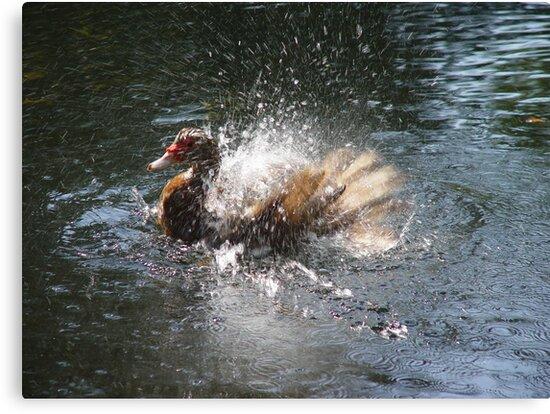 SPLISH, SPLASH, I WAS TAKIN' A BATH... by May Lattanzio