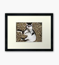Scarey Cat Framed Print