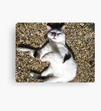 Scarey Cat Canvas Print